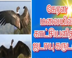 கேரள மலையில் காட்சியளித்த ஜடாயு கருடன்