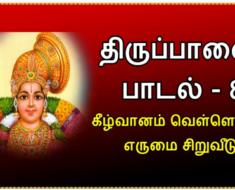 திருப்பாவை பாடல் 8 கீழ்வானம் வெள்ளென்று, எருமை சிறுவீடு - Tiruppavvai padal 8 Keezh vaanam vellenru